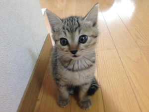 猫のワクチン受診後に副作用でぐったりしたら要注意!