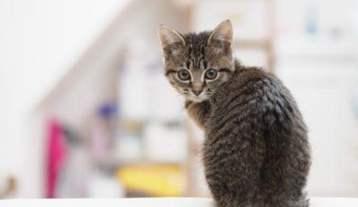 猫用の自動給水器のメリット・デメリットを紹介!電気代や使い心地など体験談まとめ